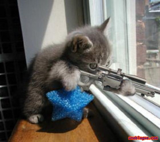 Le chat sniper