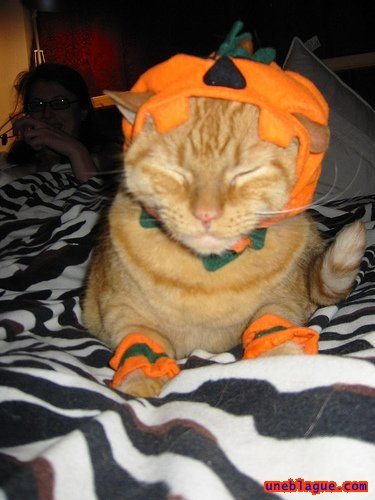 Chat halloween