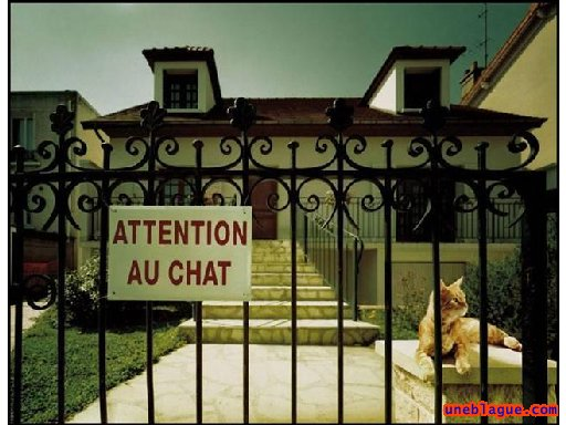 Attention chat méchant !