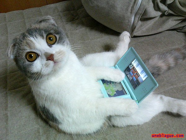 Chat Nintendo DS