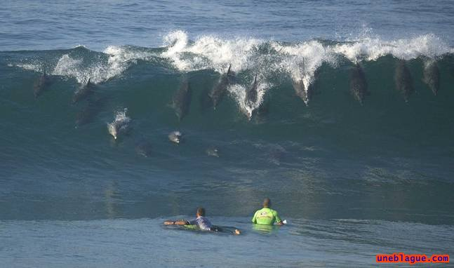 Dauphins surfeurs